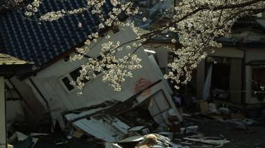 The Tsunami and the Cherry Blossom Still