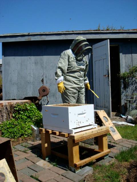beekeeper-mom