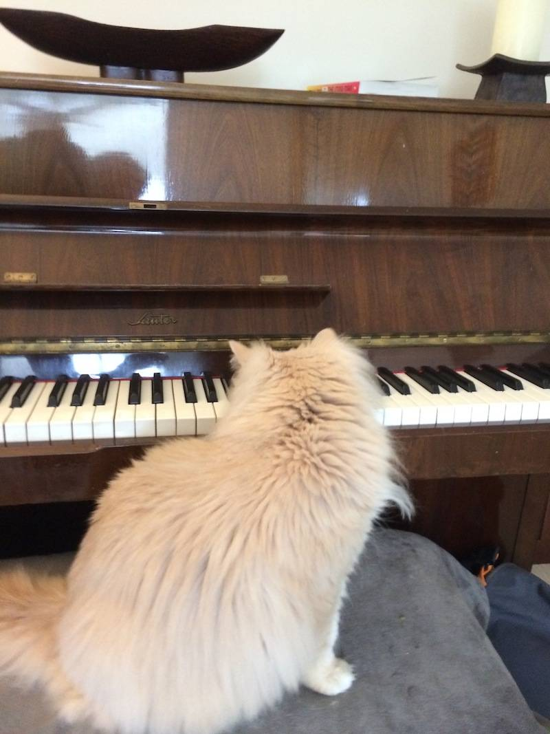 piano_kitty_02