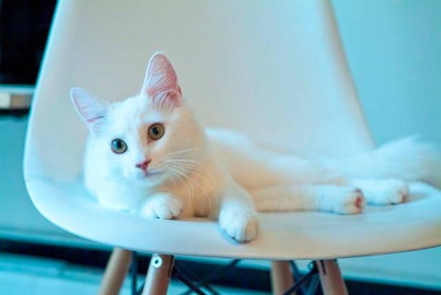 legs cat 2