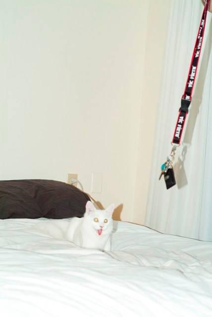 legs cat 6