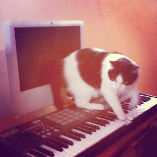 meow meow piano